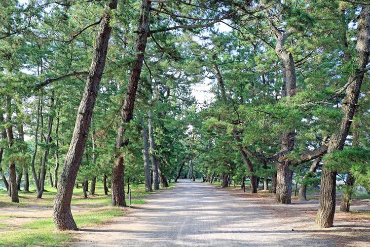 【天橋立】レンタサイクルで散策 お役立ち情報