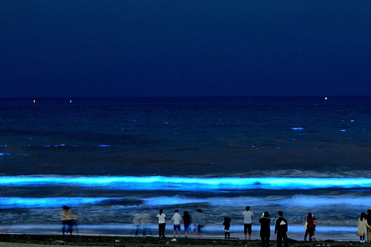 【期間限定】伊根町から「夜光虫」ウォッチングツアーを見に行こう