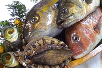 近隣漁港で獲れる新鮮な海の幸