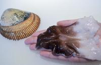時期限定の大トリ貝